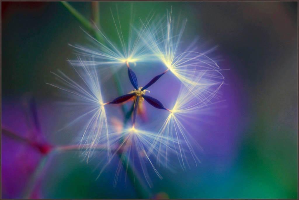 Virus Flower dandelion