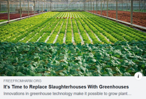 Greenhouse Slaughter